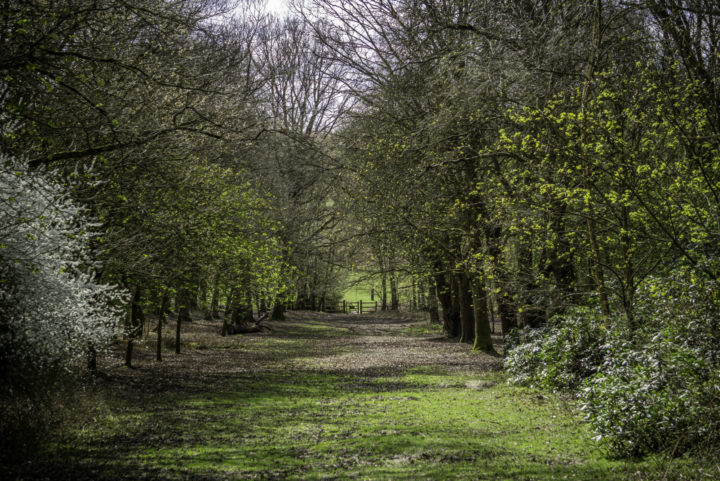 Woods at Weald.