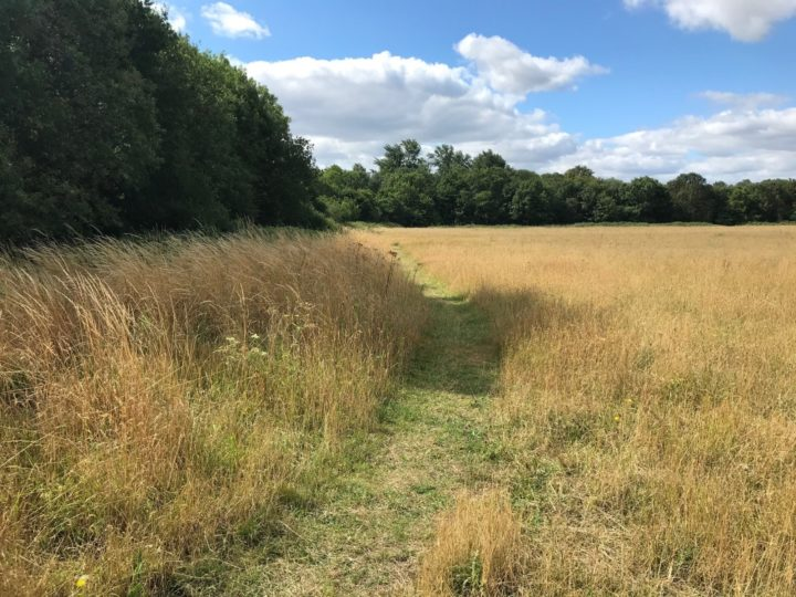 Path through the meadow in summer at Belhus.