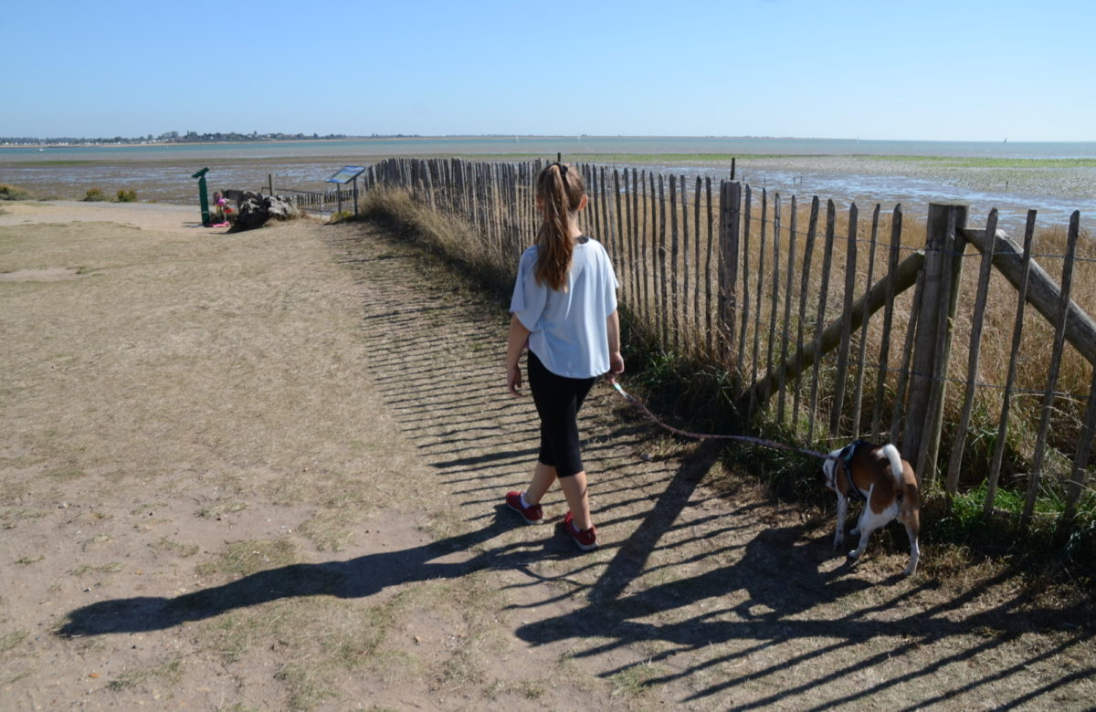 A young girl walking a dog along a beach