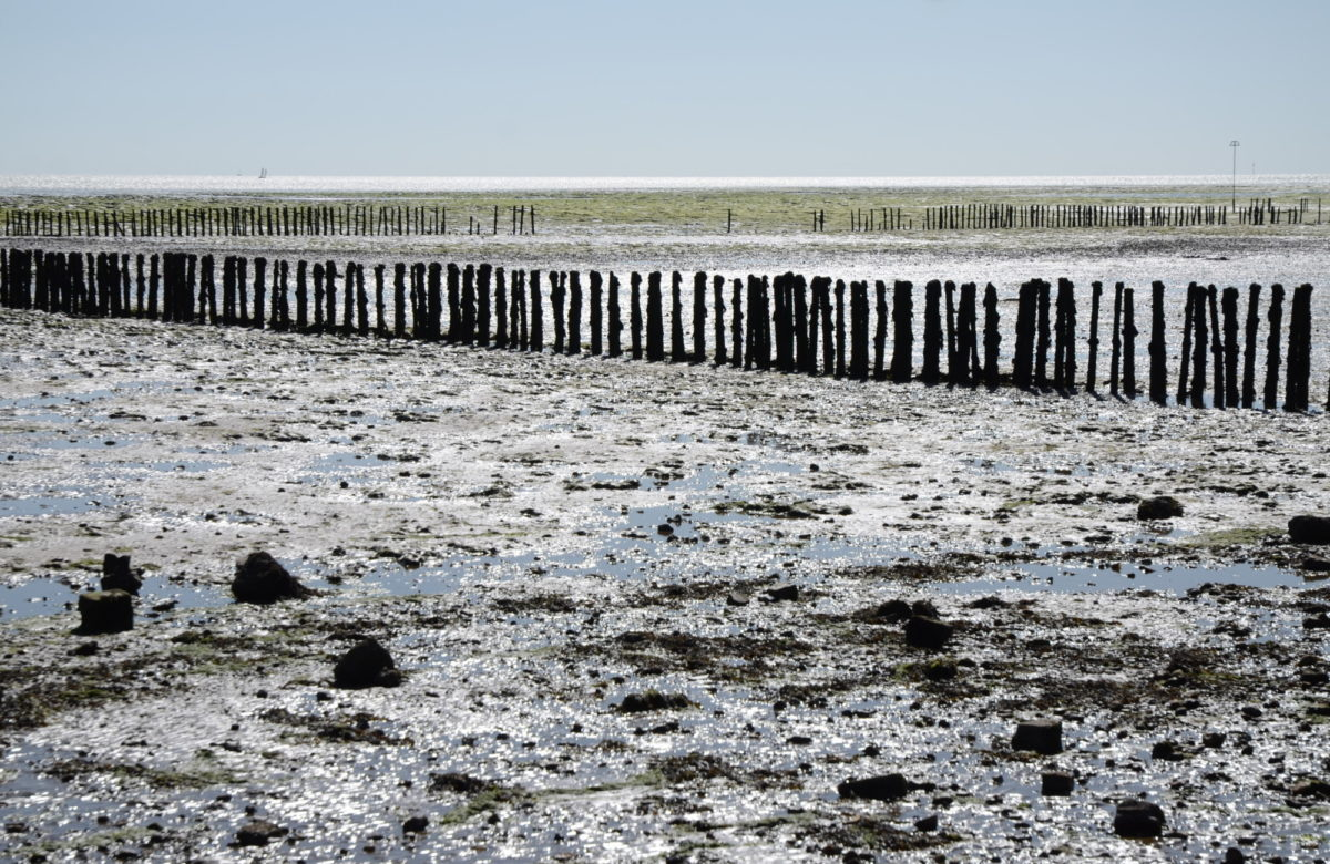 A muddy beach at low tide