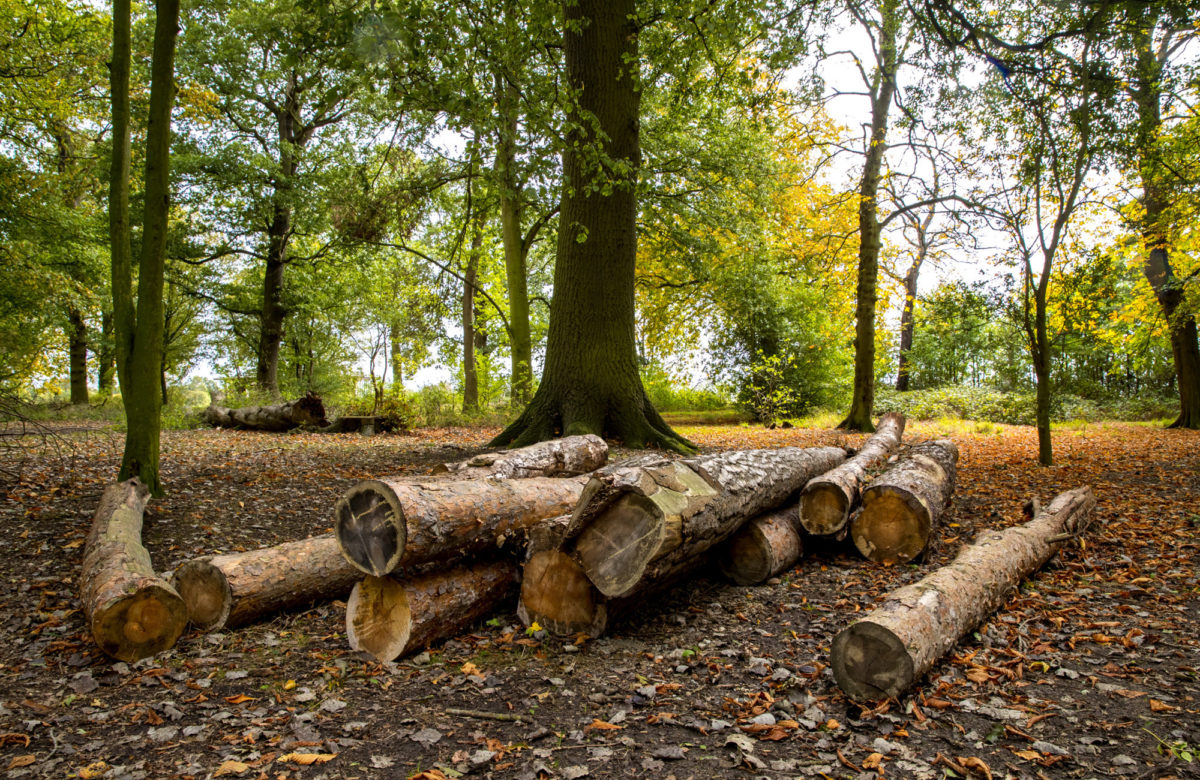 Logs on the forest floor