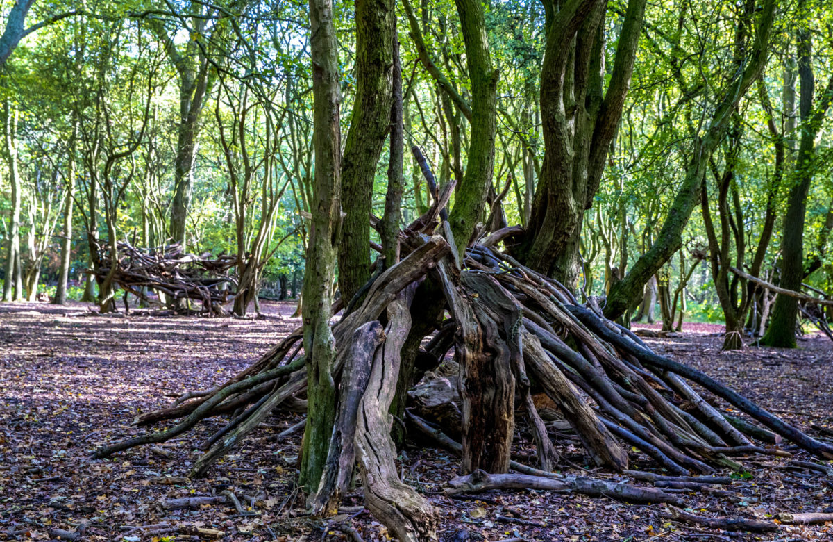 A log pile den in a forest