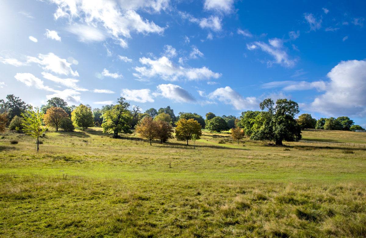 A meadow surrounded by trees on a sunny day
