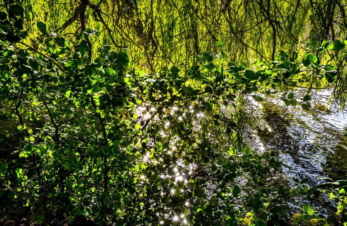 A lake in the shadow of a weeping willow tree