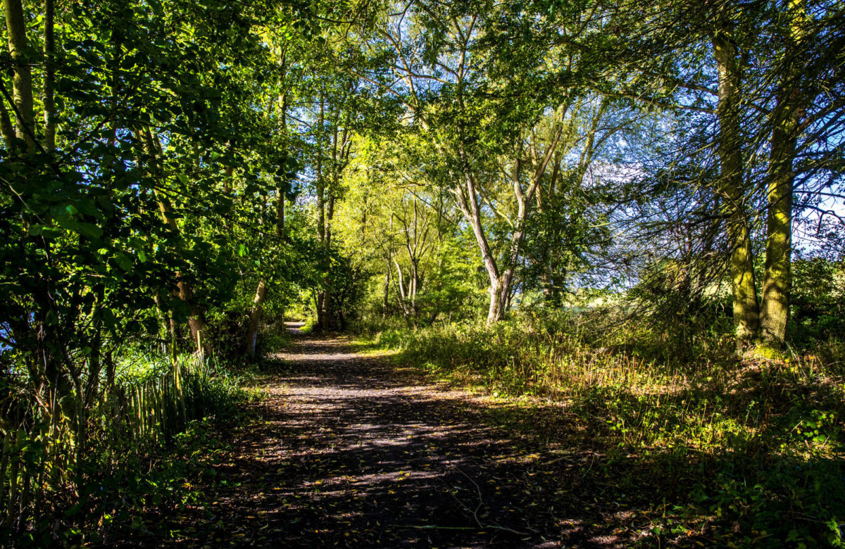 A secluded path surrounded by trees