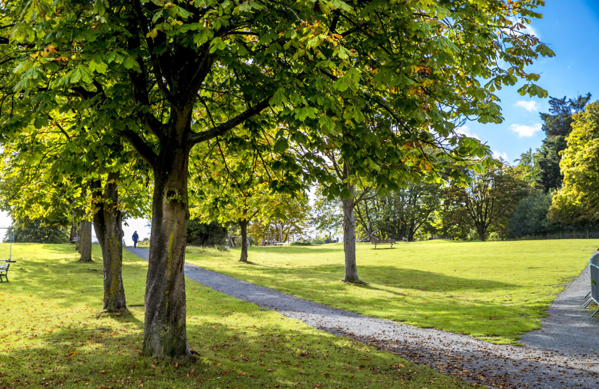 A grassed space with trees and paths
