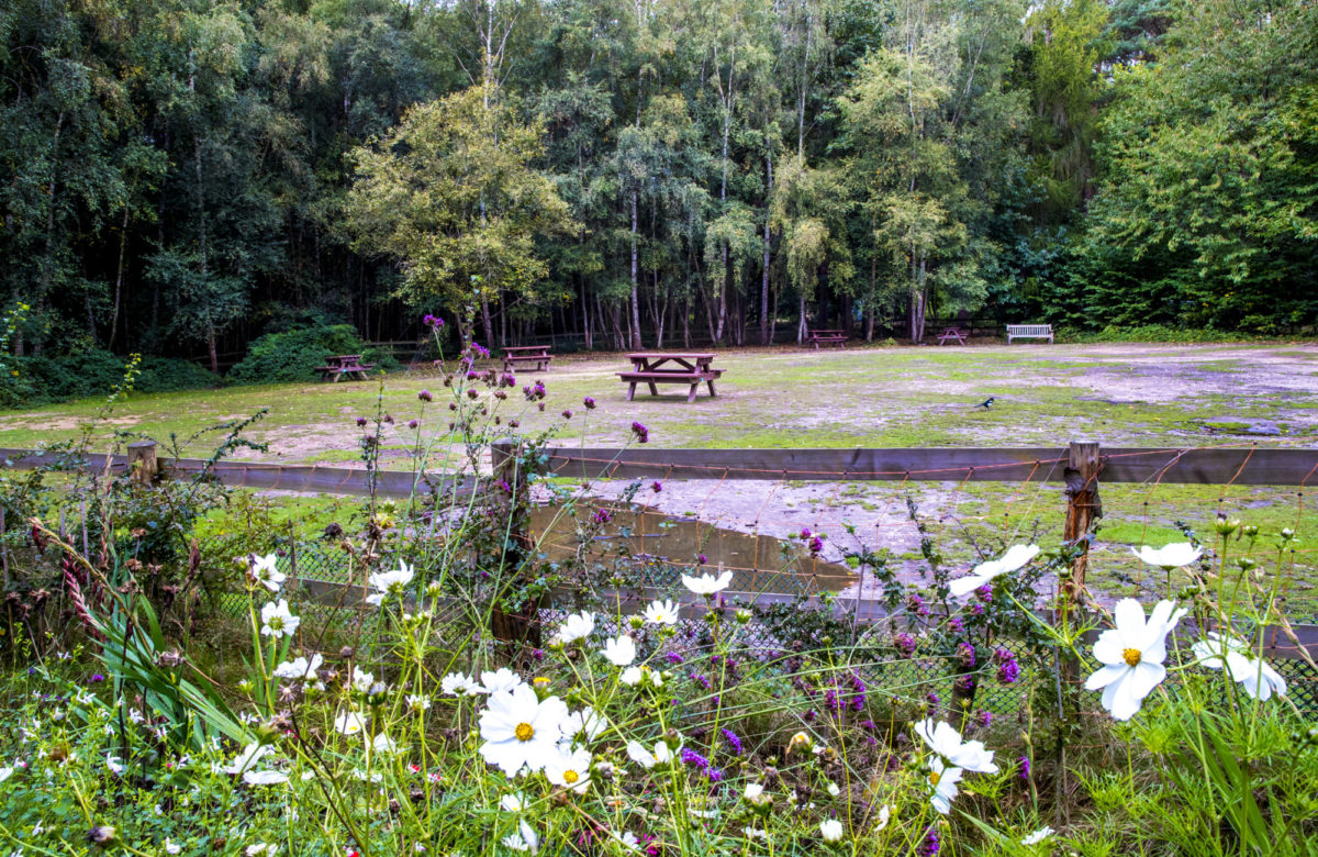 A picnic area in a wooded space