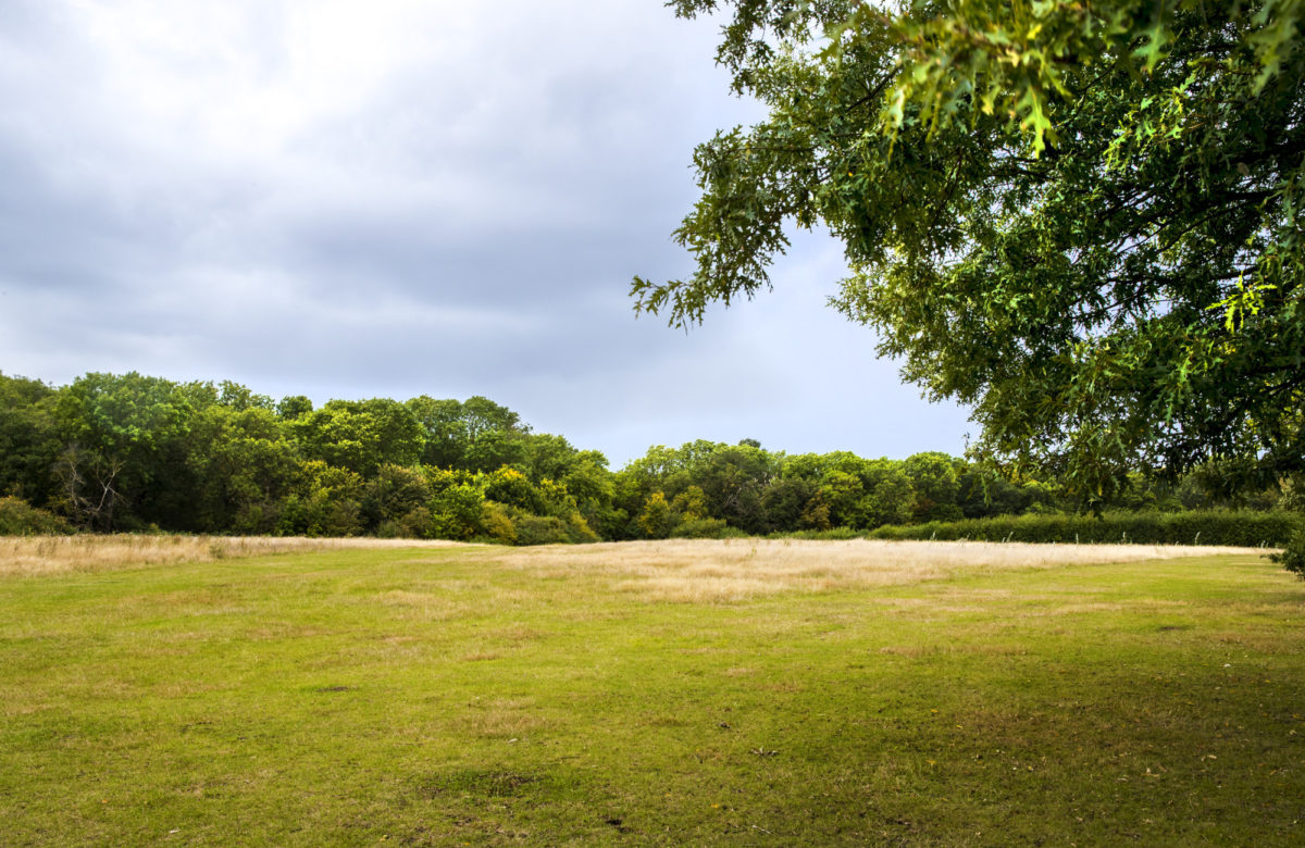 An open grassy area surrounded by trees