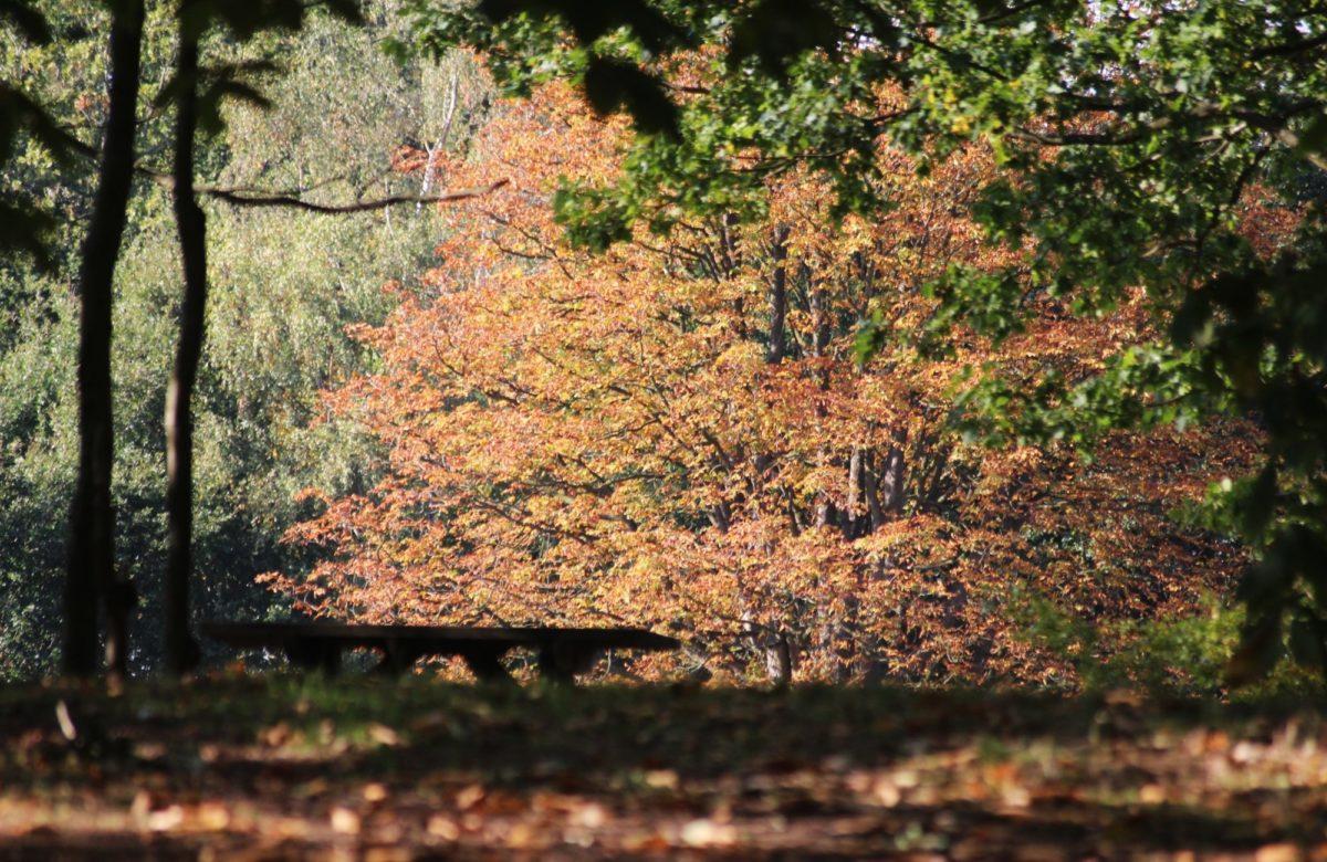 Danbury country park trees