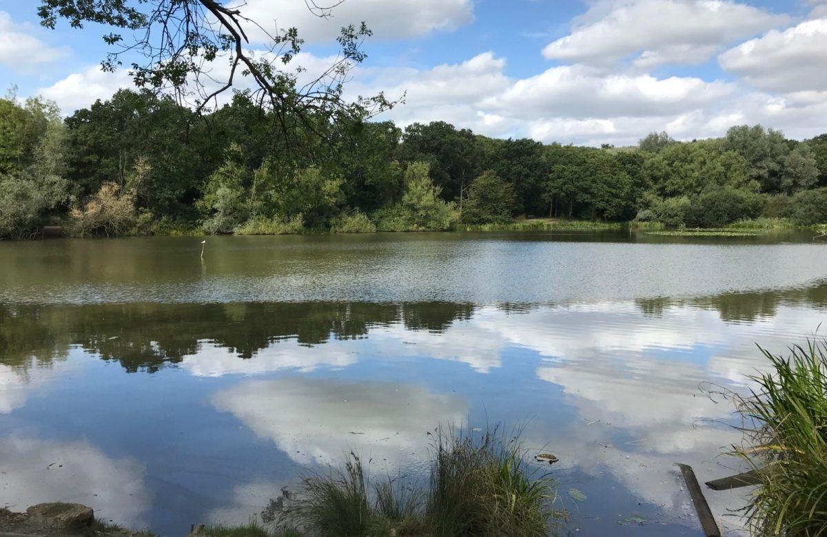 Old Hall Pond