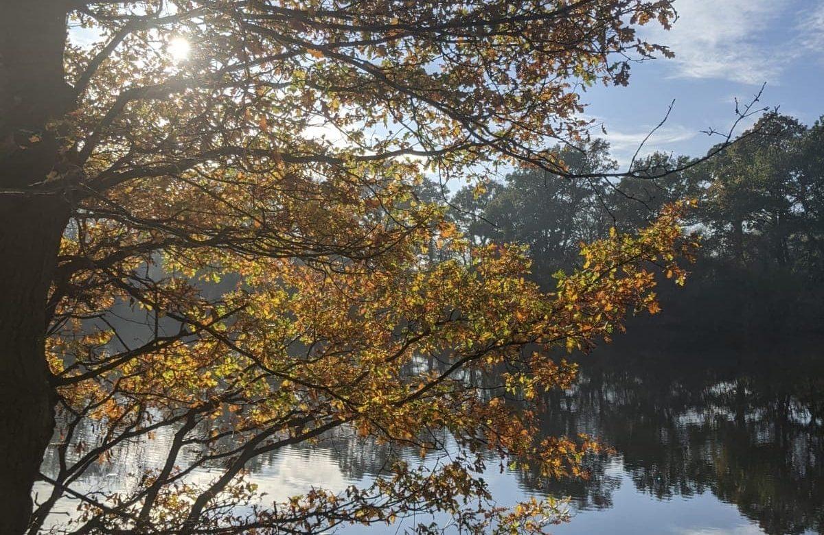 T south lake 1