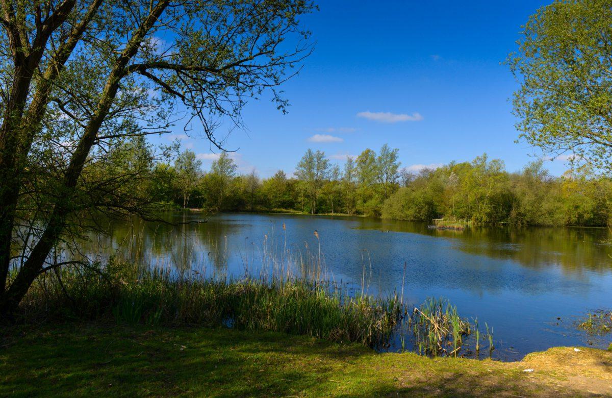 A tree-lined lake