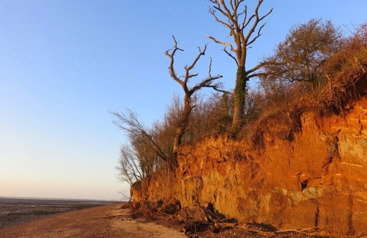 The coast at Cudmore Grove at sunset