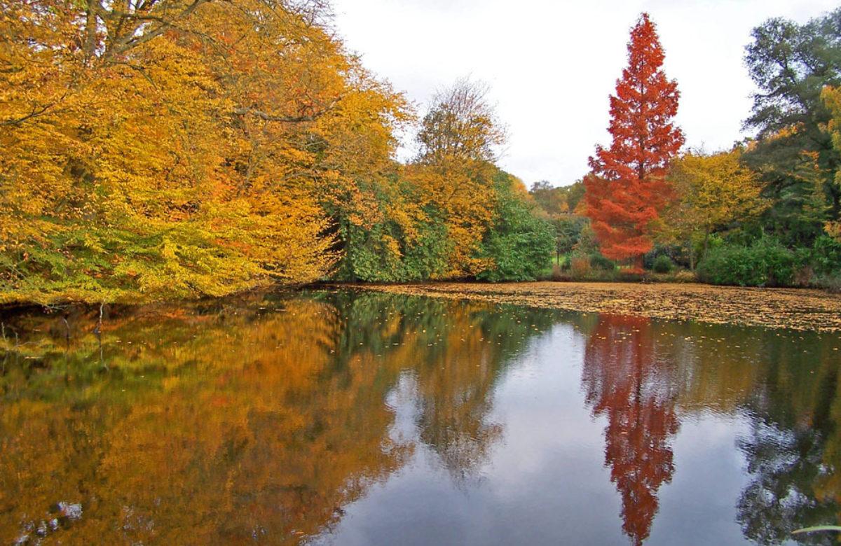 Danbury country park lake