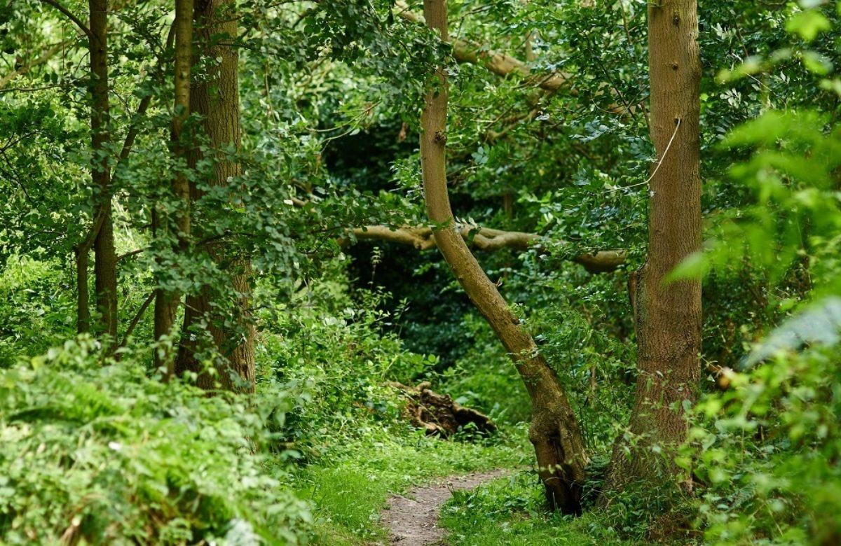 Woodland trails in a forest