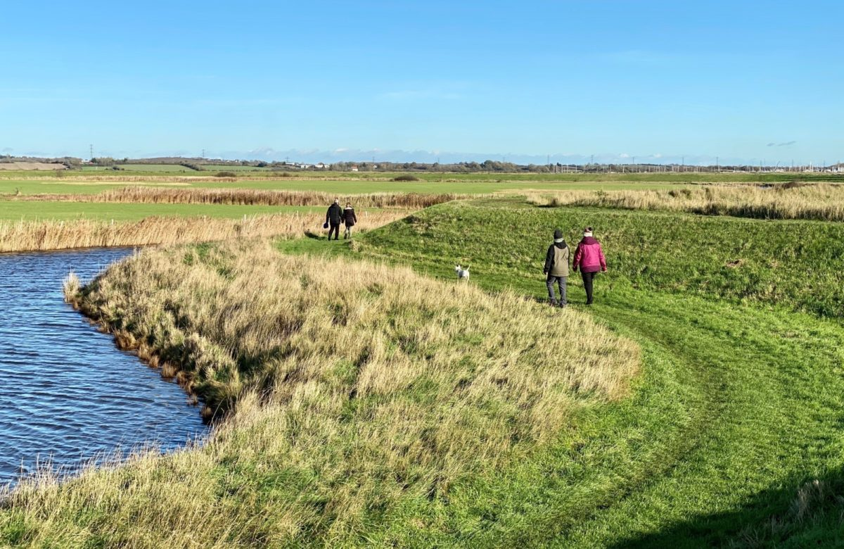 Marsh farm walkers