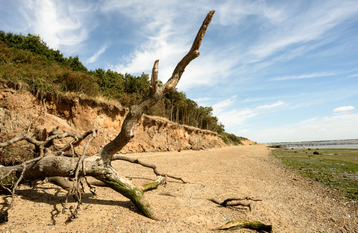 Driftwood on a beach during the day