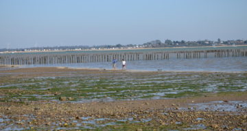 A stony beach at low tide during the day