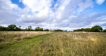 A large grass meadow with path running through it