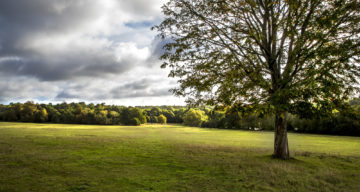 A grassy meadow and tree on a cloudy day