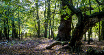 A forest with path and wooden gate