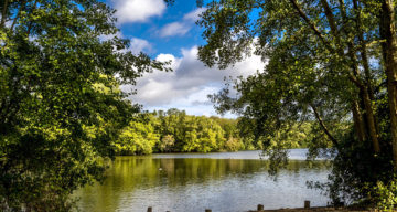Lake and trees at Weald