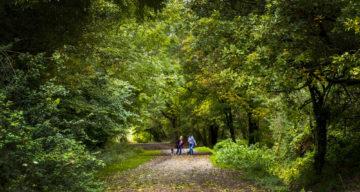People walking along a woodland path