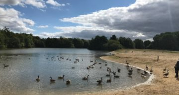 Lake and Geese