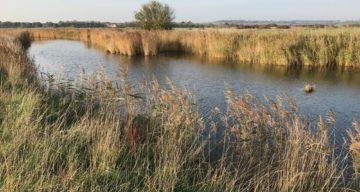 Marsh farm reed lined water