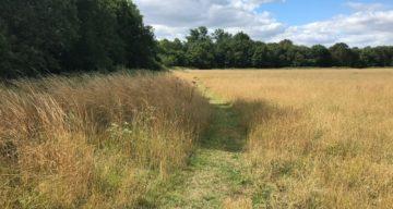 Path through meadow