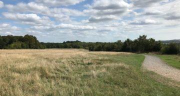 Thorndon South bridleway through pastures