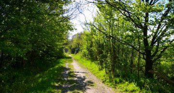 A muddy trail through a forest