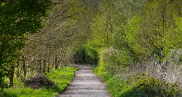 A tree-lined path through a forest