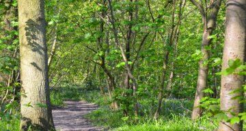 A trail through a forest