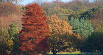 Danbury country park forest