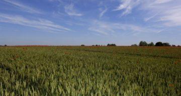Flitch Way crop field