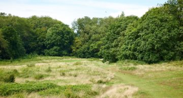 Open space and woodland at Hadleigh