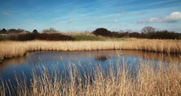 A marsh surrounded by long grass