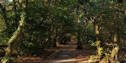 Belhus path