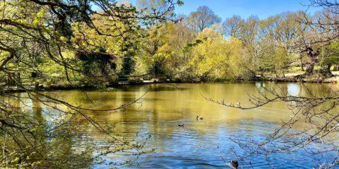 Danbury spring 21