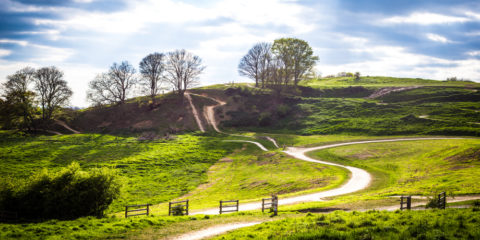 The mountain bike trails at Hadleigh