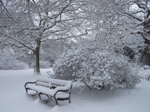 Danbury country park bench in the snow