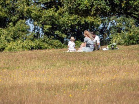 Picknick in the Meadow SW small
