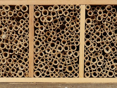 Insect hotel 5125527 1920